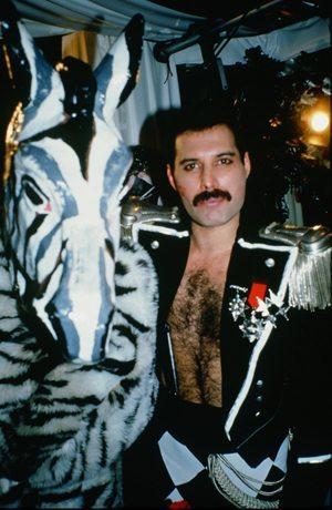 Freddie Mercury Zebra - 300