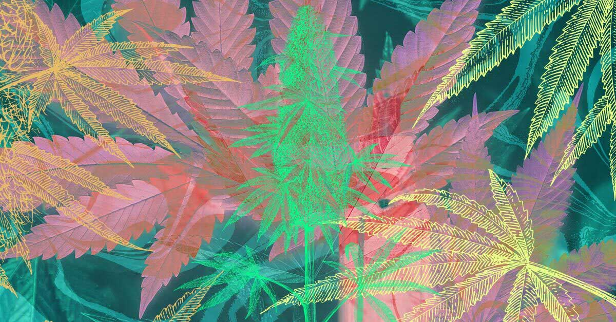 Best Songs About Marijuana: 25 Tracks To Help Get Your Buzz On
